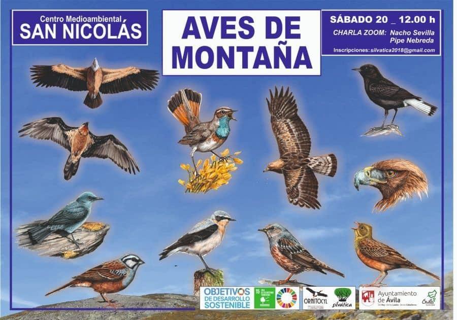 aves de montaña