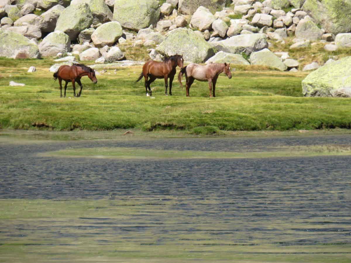 caballos Laguna Grande