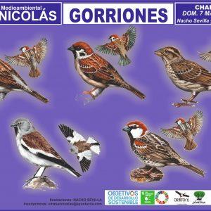 charla zoom gorriones